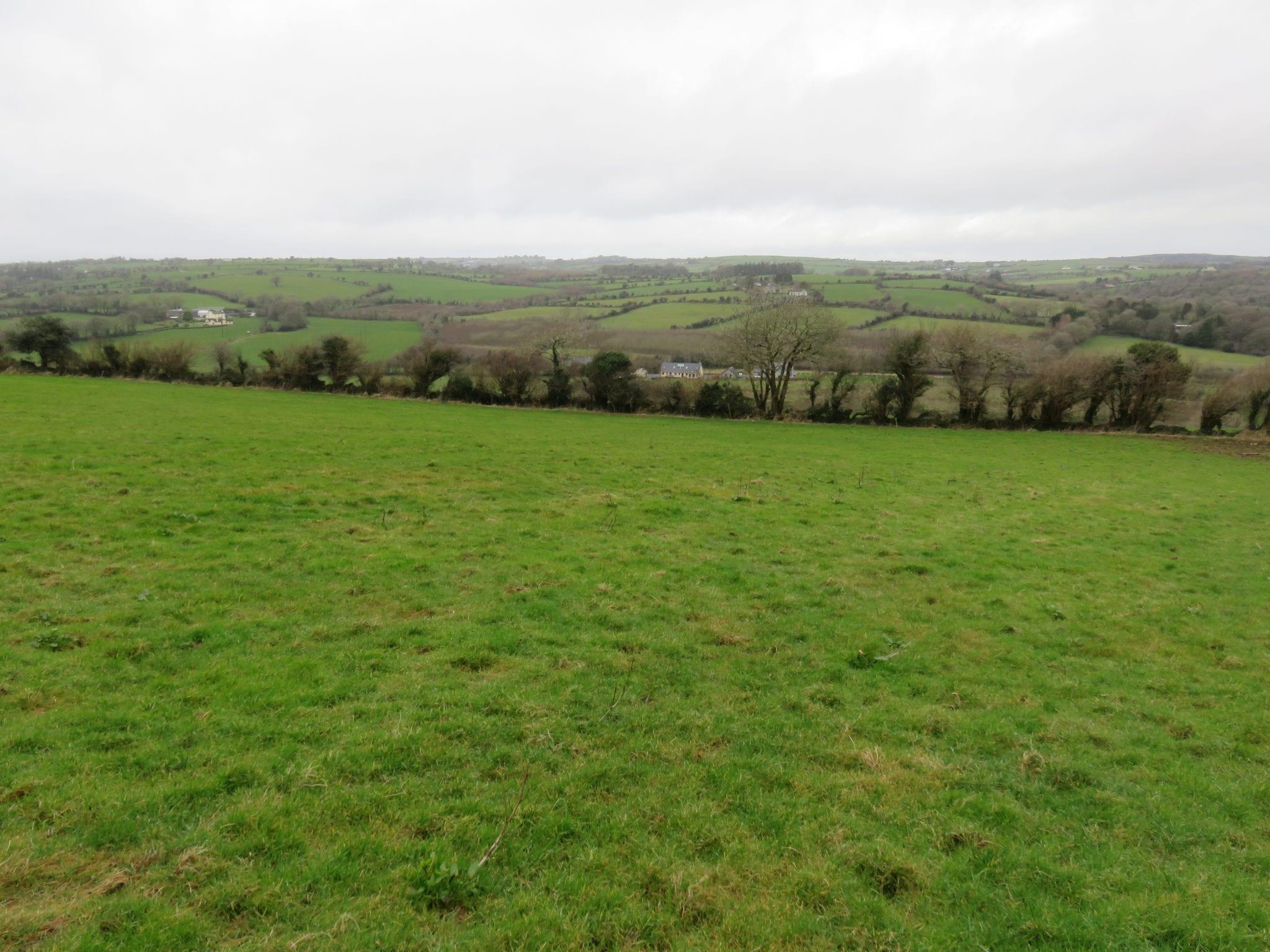 16. Field 3
