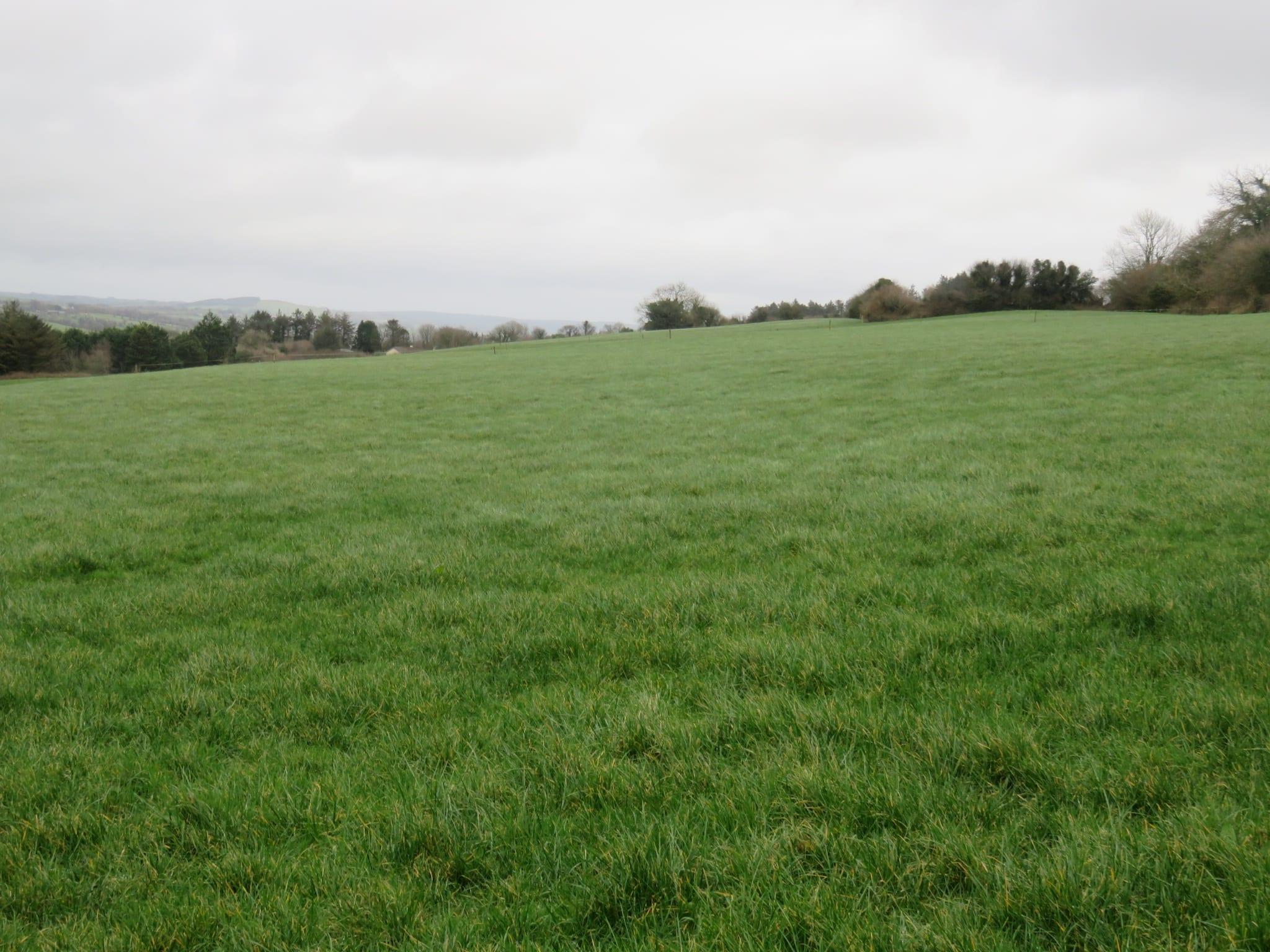 17. Field 4