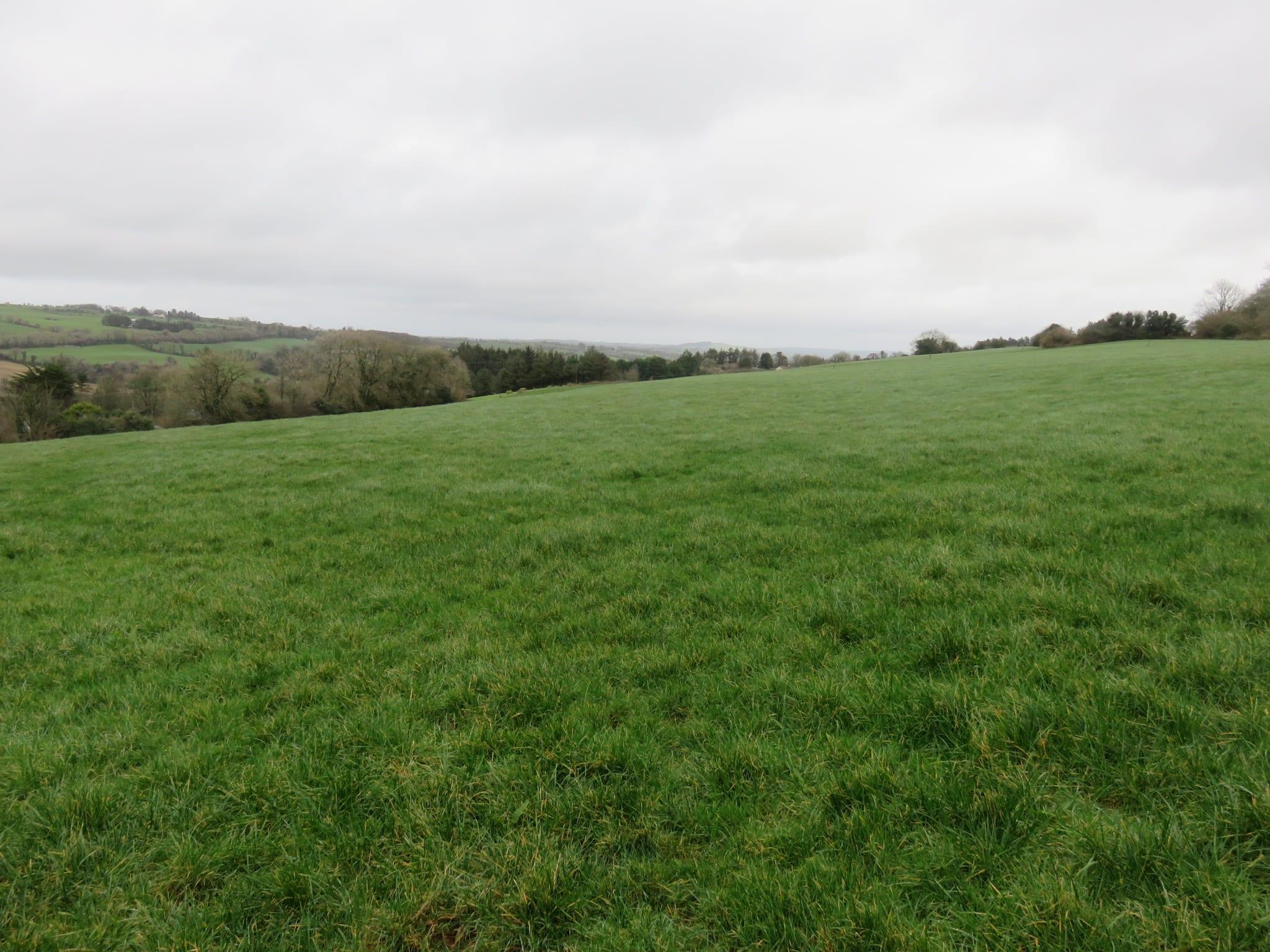 18. Field Photo 1