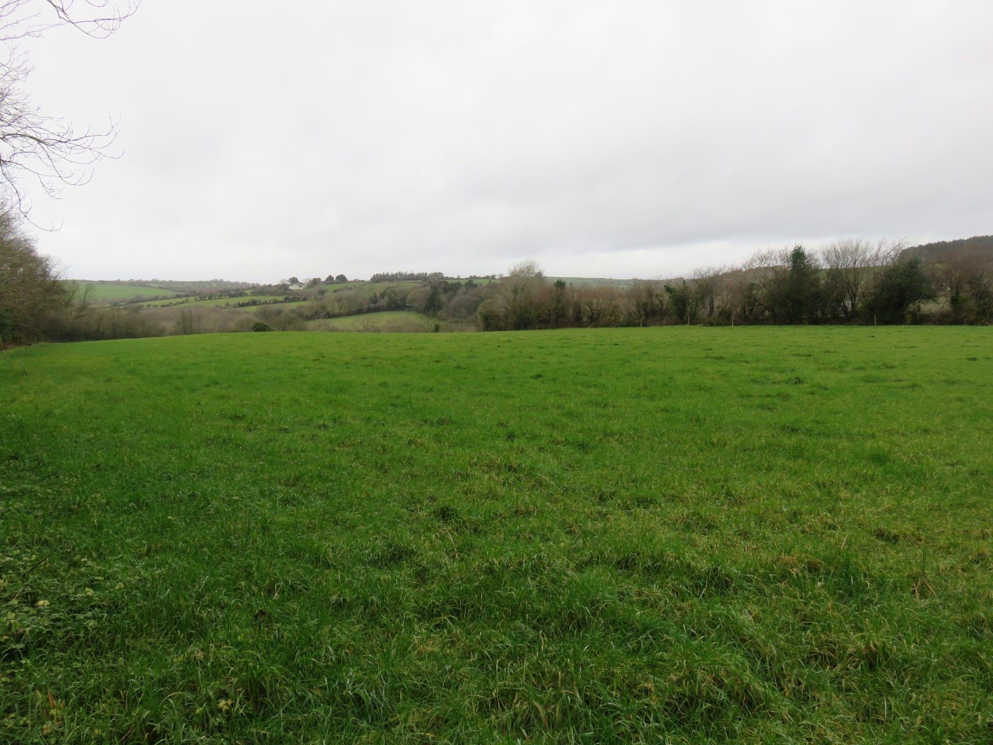 19. Field Photo 2