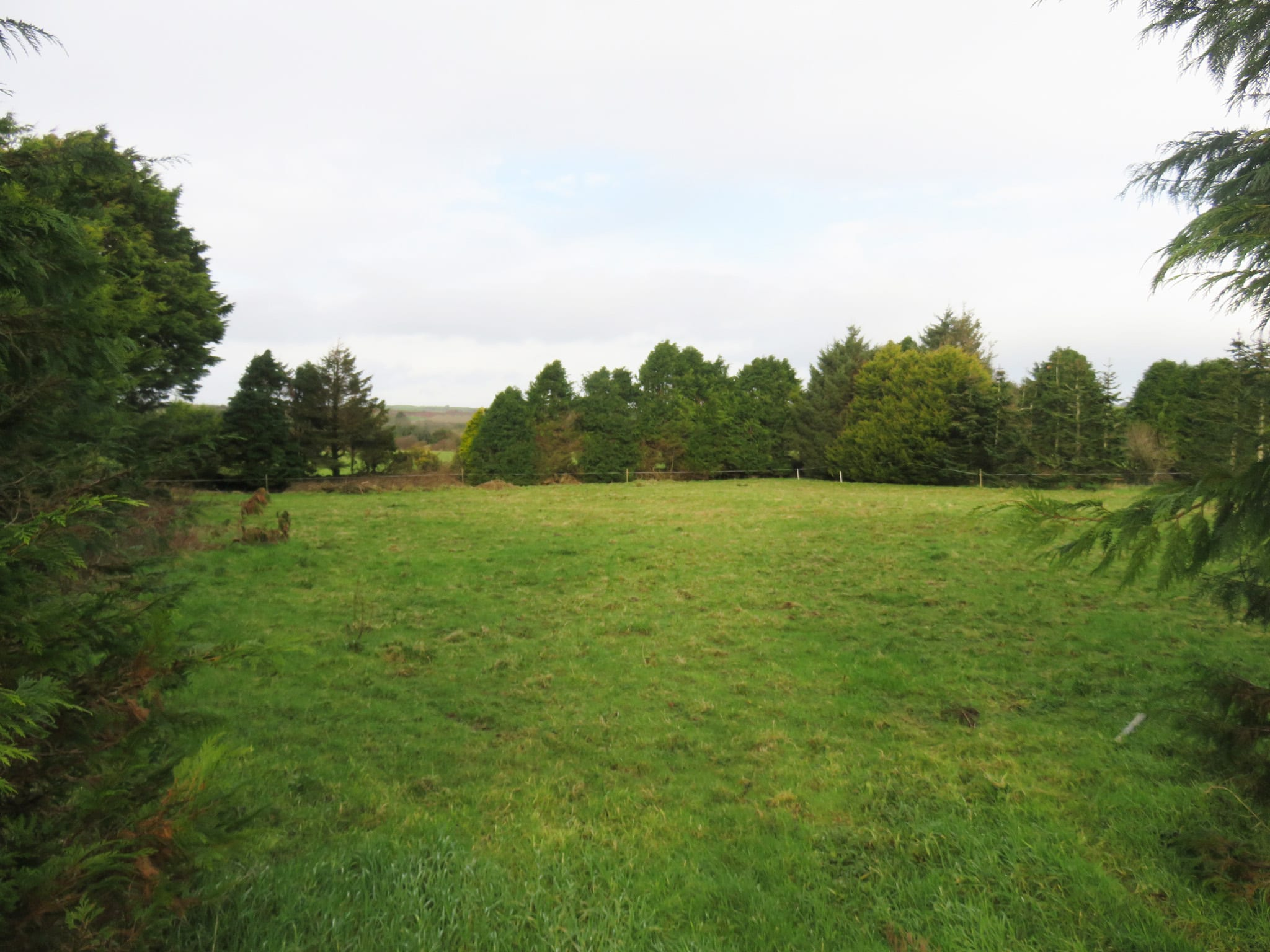Second Image of Site