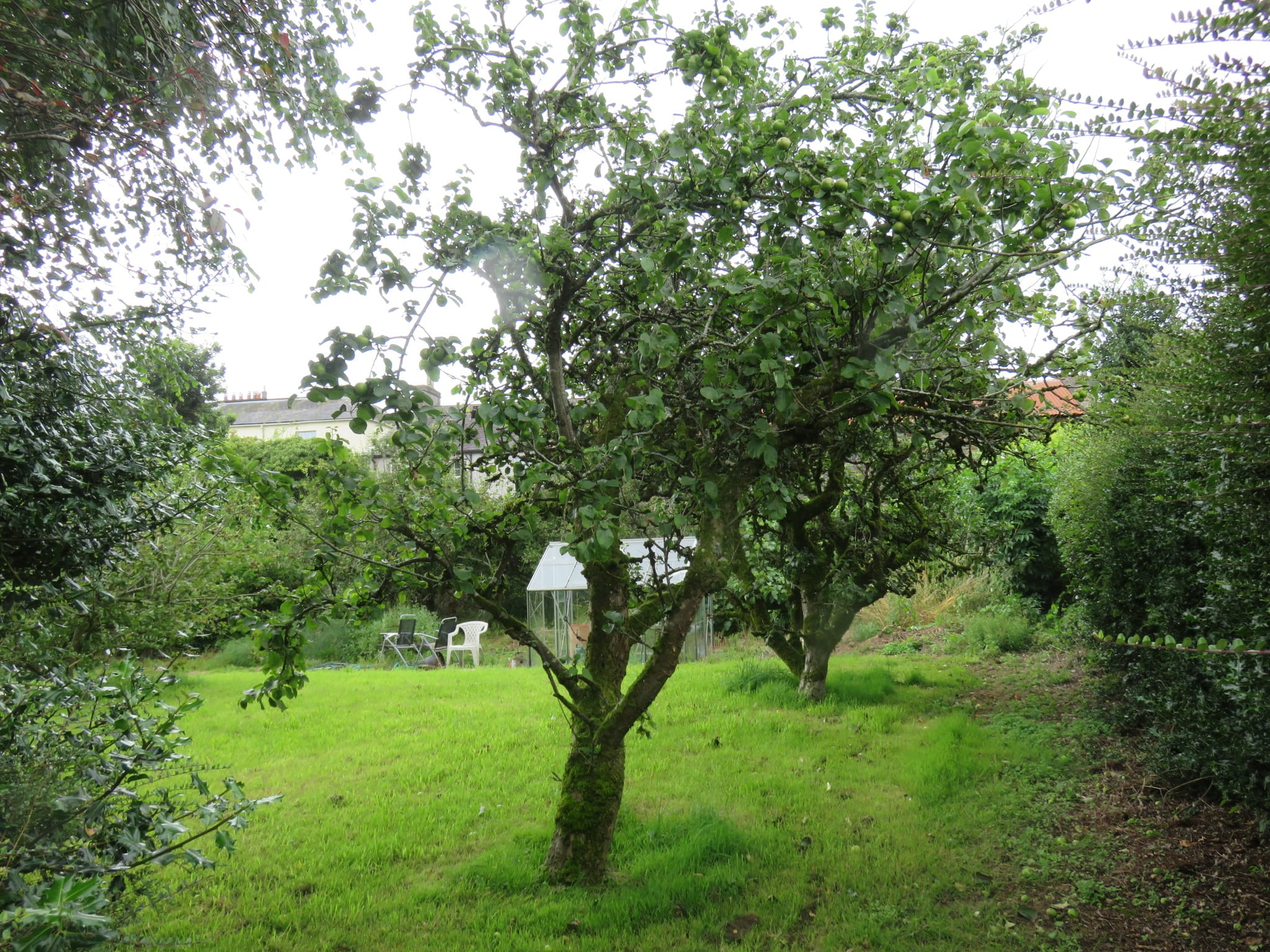 15. Fruit Trees IMG_6957