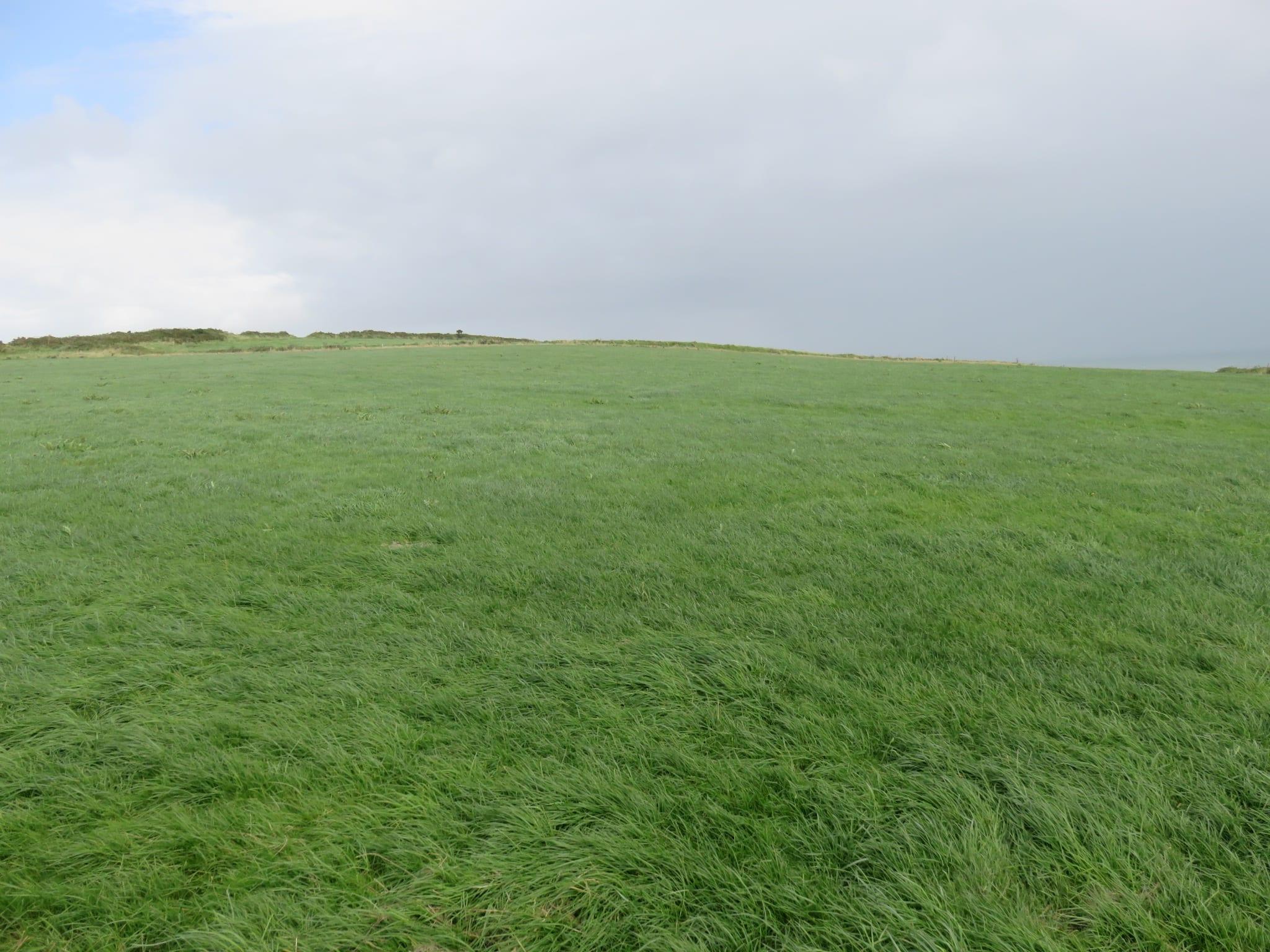 IMG_9989 grass